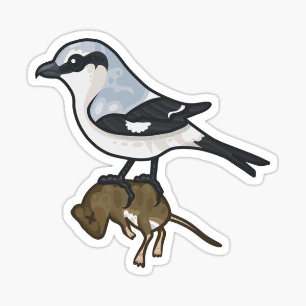 Northern Shrike Sticker