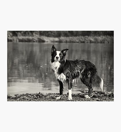 Attentive Photographic Print