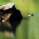 Behind the Big Rock by RockyWalley