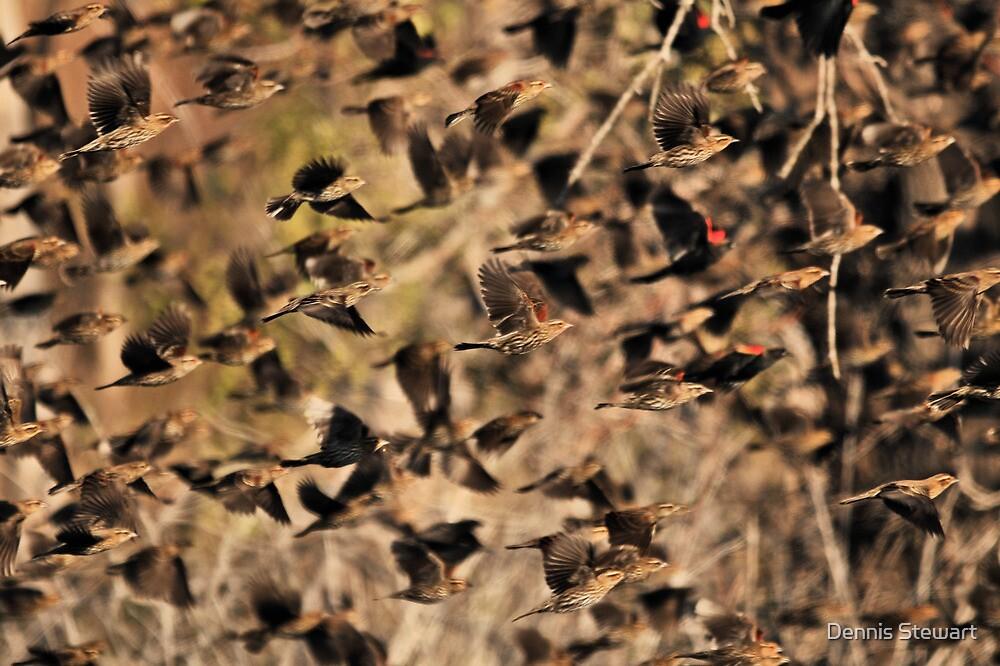 Flight of the Red-Winged Blackbirds by Dennis Stewart