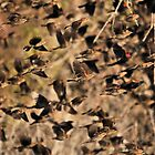 Flight of the Red-Winged Blackbirds by Dennis Stewart