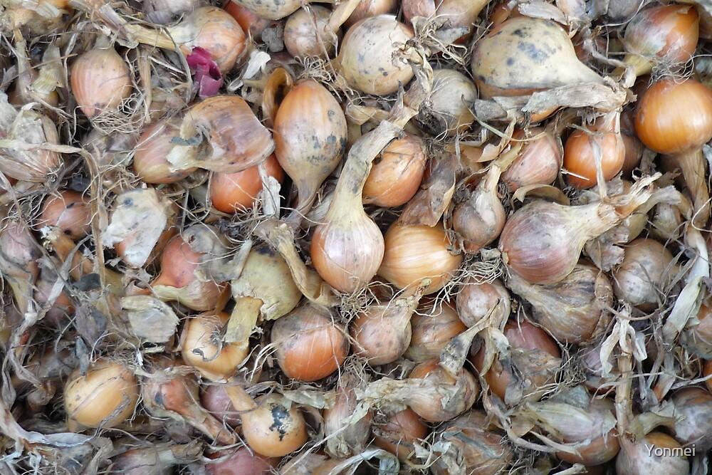 Onions by Yonmei