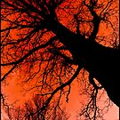 The Hanging Tree by Georgi Ruley: Agent7