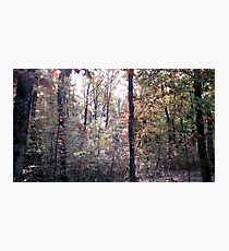 Kaona Wood - Six days later - 3 Photographic Print