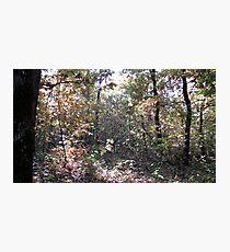 Kaona Wood - Six days later - 4 Photographic Print