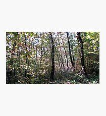 Kaona Wood - Six days later - 5 Photographic Print