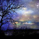 Night Fall © by Dawn Becker