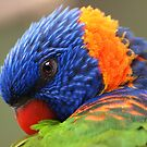 Rainbow Lorikeet by Paula McManus