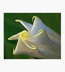 Unfolding Flower Photographic Print