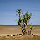 Low Tide at Mindil Beach, Darwin by Lynette Higgs