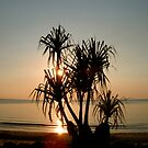 Pandanus Sunset on Mindil Beach by Lynette Higgs