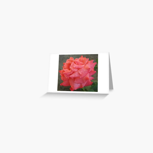 Ruffled Rose Greeting Card