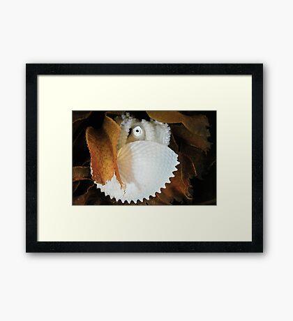 Paper Nautilus Framed Print