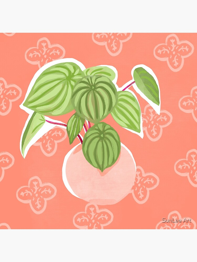 Peperomia by sunleeart
