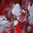 Scarlet Snow #3 by christiane