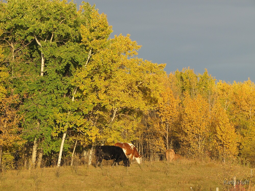 Autumn Cows by Kathi Huff