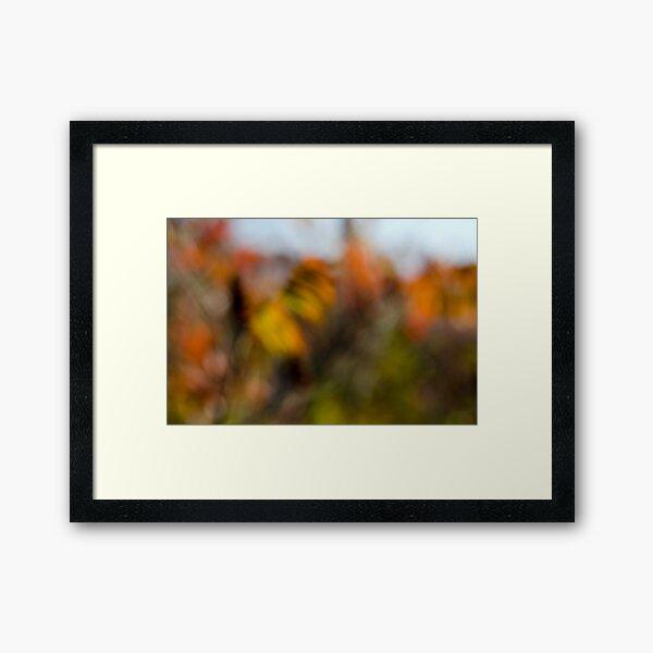 Autumn Sumac Framed Art Print