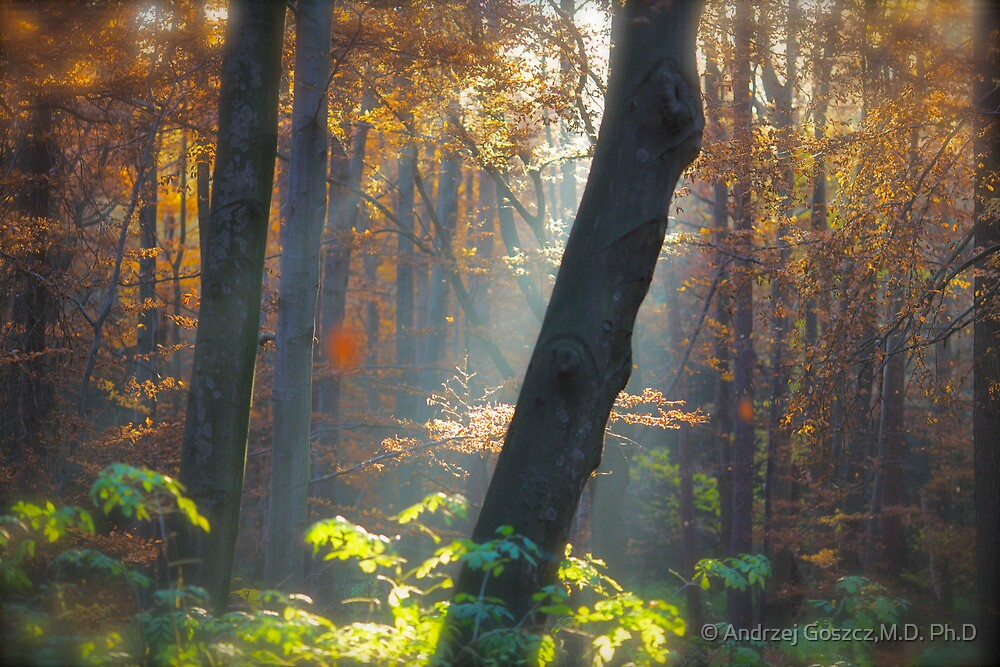 5 ★★★★★ . Autumn Miracle . November . by Brown Sugar . Favorites: 11 Views: 359 . thanks ! featured Canon Photography Only. by © Andrzej Goszcz,M.D. Ph.D