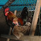 Rooster and hen in the henhouse by Emazevedo