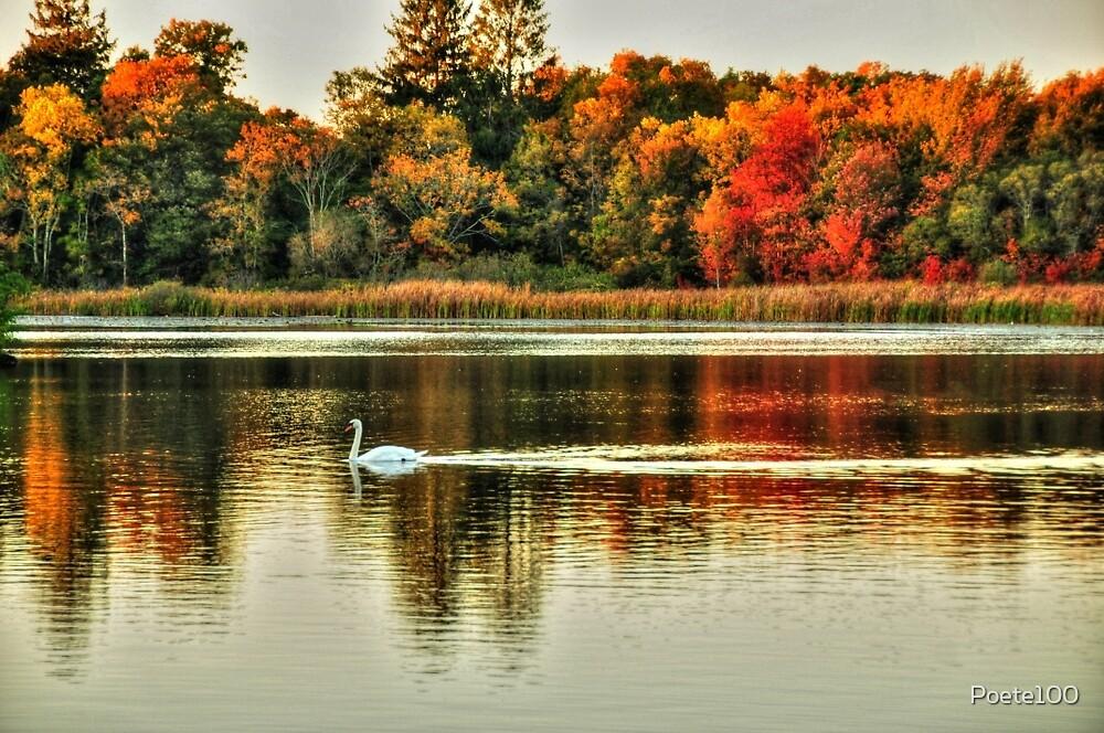 Autumn Splendor by Poete100