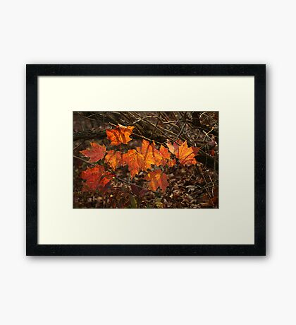 The Transparency of Fall Framed Print
