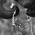 Elephant Drink by Rhys Herbert