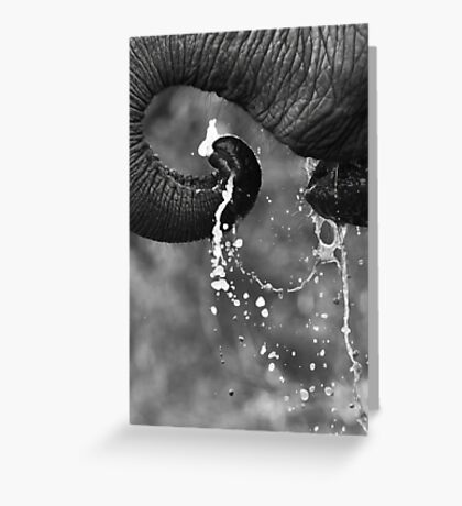 Elephant Drink Greeting Card