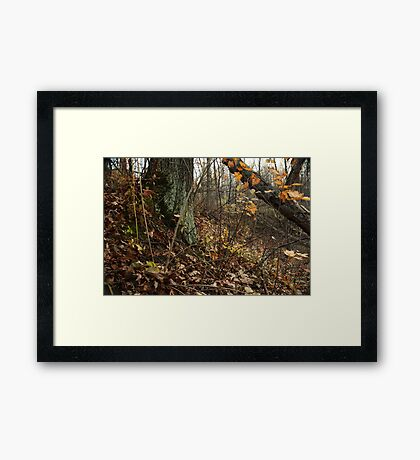 A Sloping Forest Scene Framed Print