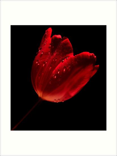 TULIP TEARS~ by RoseMarie747