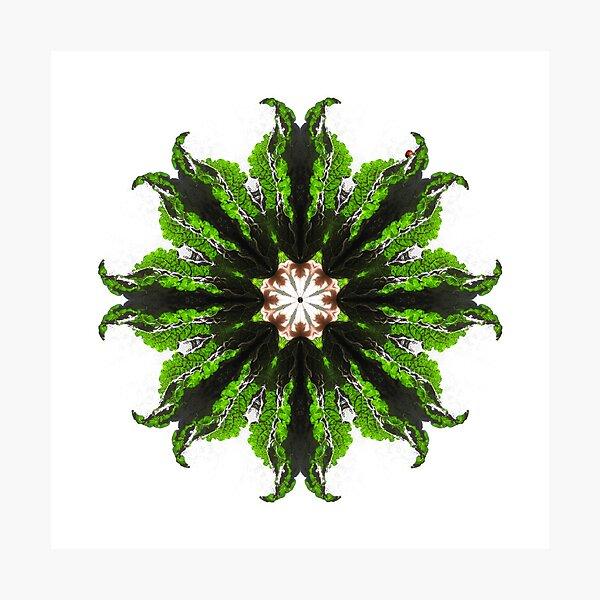 Kale and Ladybug Mandala Photographic Print