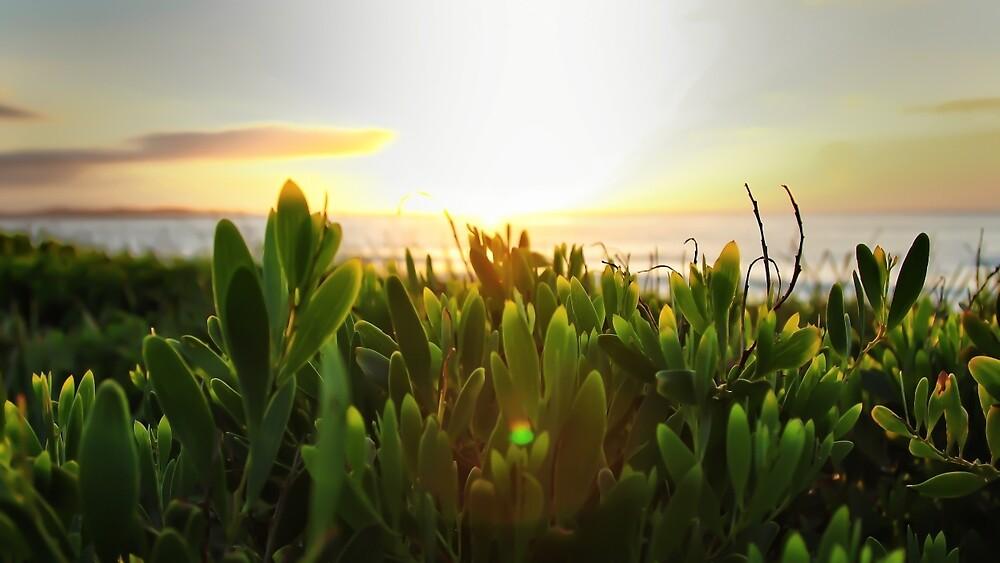 Sunrise greenery by PastorCameron