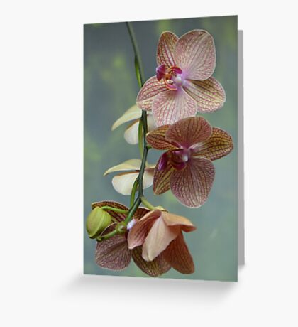 Blooming Orchids and Buds Greeting Card