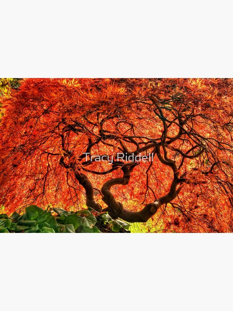 Maple Matrix by taos