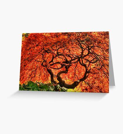 Maple Matrix Greeting Card