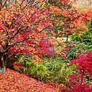 Symphony of Leaves by Tracy Riddell