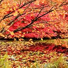 Autumn Leaves Over Pond by Tracy Riddell