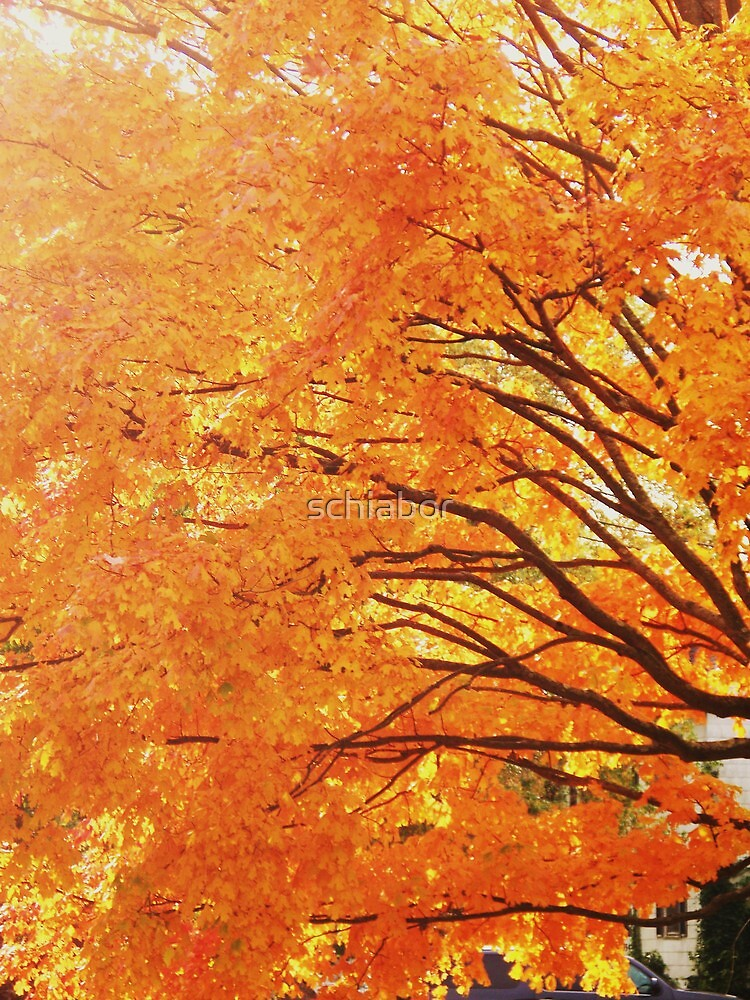Fall Trees by schiabor