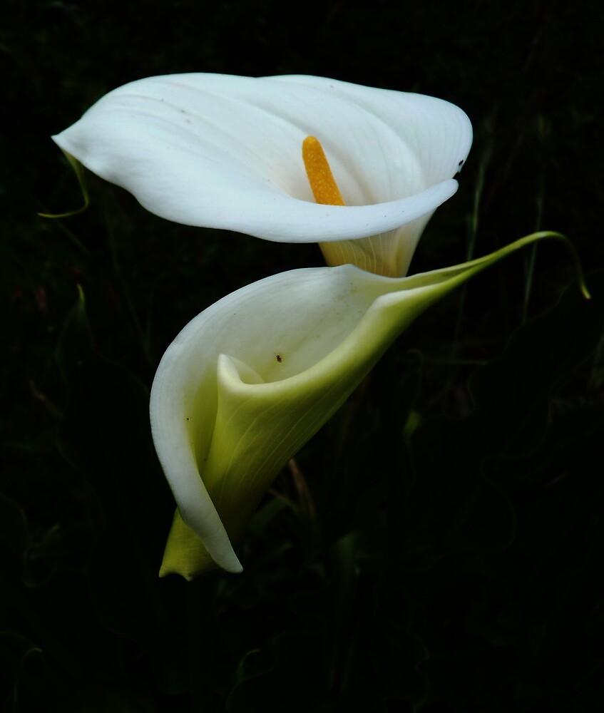 """Consider the Lillies..."" by Meg Hart"