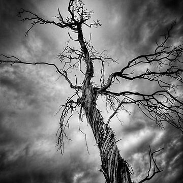 Wicked Twisted by boblarsonphoto
