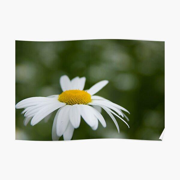Daisy Poster