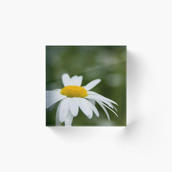 Daisy Acrylic Block