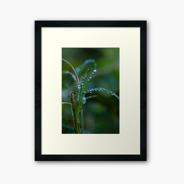 Water drops on leaves (3) Framed Art Print