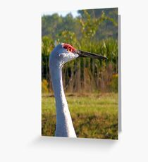 Sandhill Crane Greeting Card