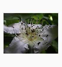 spring macro flower blossoms Photographic Print