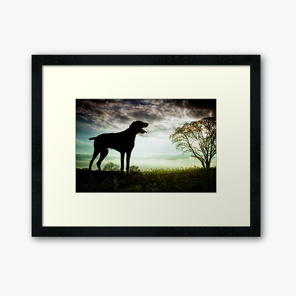German Wirehaired Pointer Sunset Framed Art Print