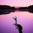 Purple Dusk by Chris Cherry