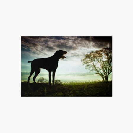 German Wirehaired Pointer Sunset Art Board Print