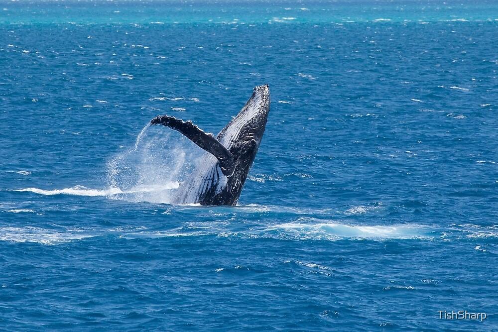 Whale Breaching by TishSharp