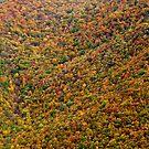 Fall - Pennsylvania by mattnnat