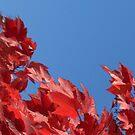 Autumn Sky by © Joe  Beasley IPA